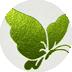 箔押し加工|キウイグリーン
